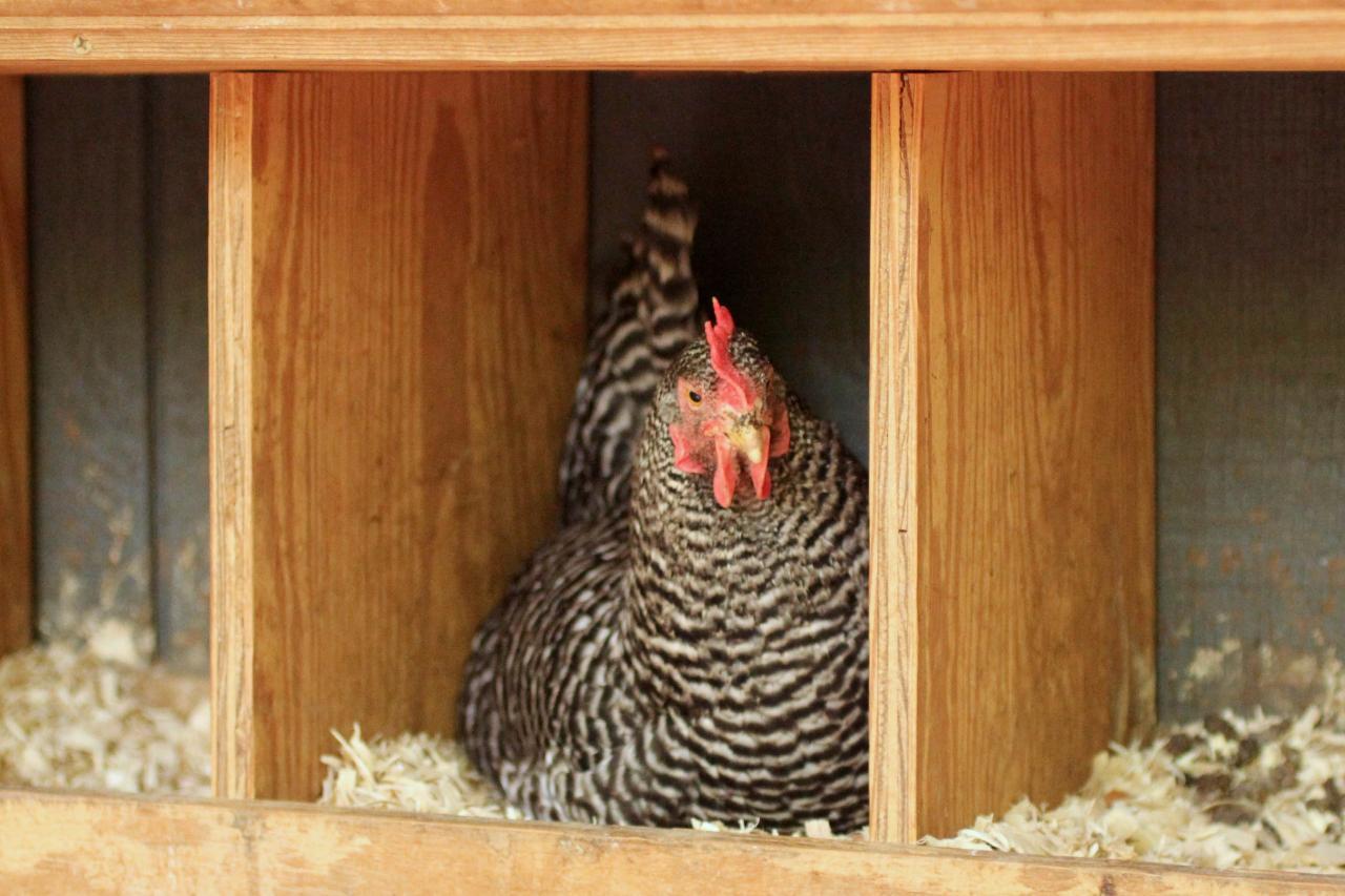 Nesting pt. 1 (LivingRoom)